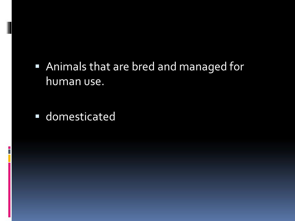  Animals that are bred and managed for human use.  domesticated