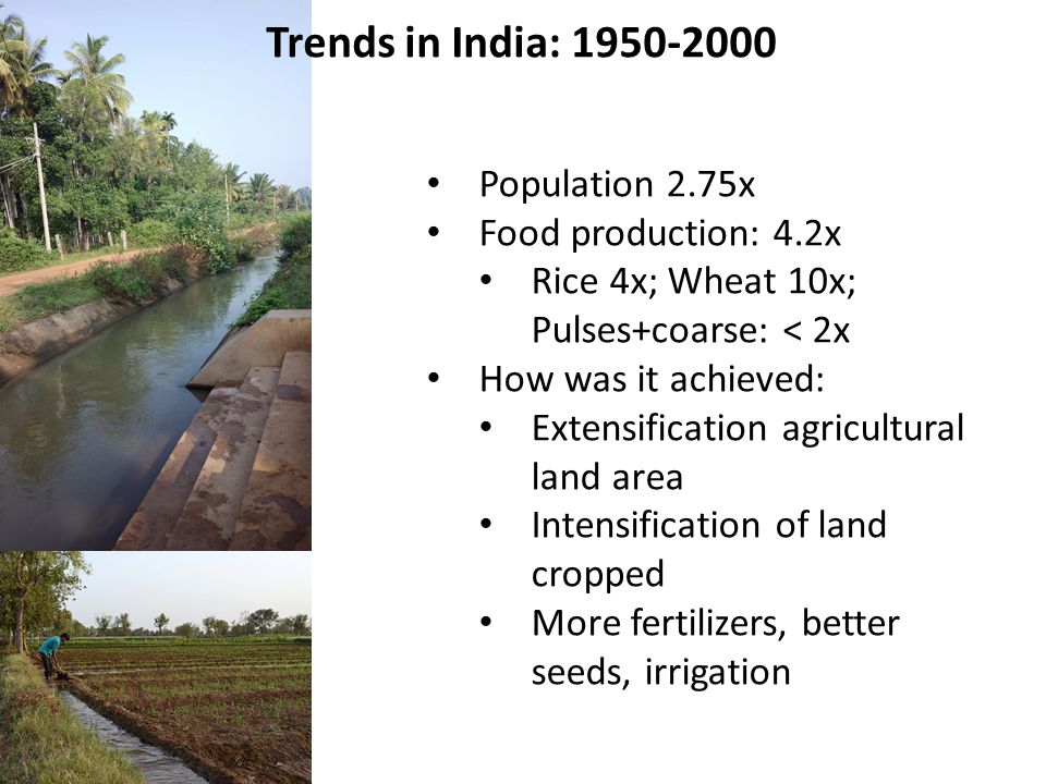 Population 2.75x Food production: 4.2x Rice 4x; Wheat 10x; Pulses+coarse: < 2x How was it achieved: Extensification agricultural land area Intensification of land cropped More fertilizers, better seeds, irrigation Trends in India: 1950-2000