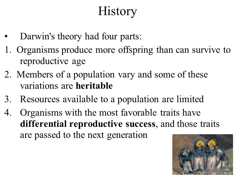 Darwin's theory had four parts: 1. Organisms produce more offspring than can survive to reproductive age 2. Members of a population vary and some of t