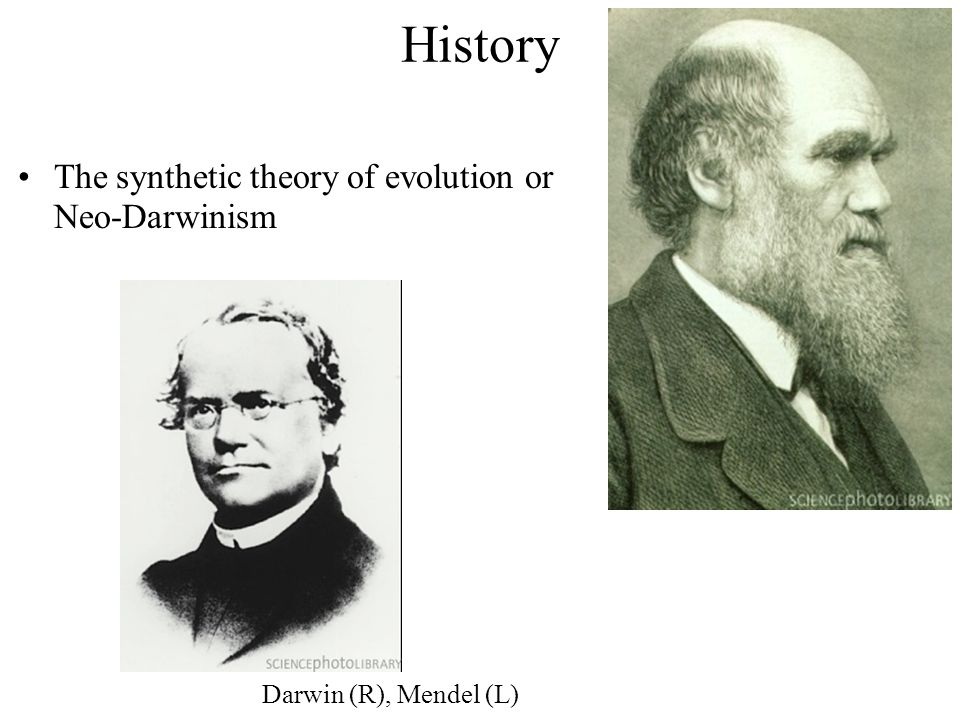 The synthetic theory of evolution or Neo-Darwinism Darwin (R), Mendel (L)