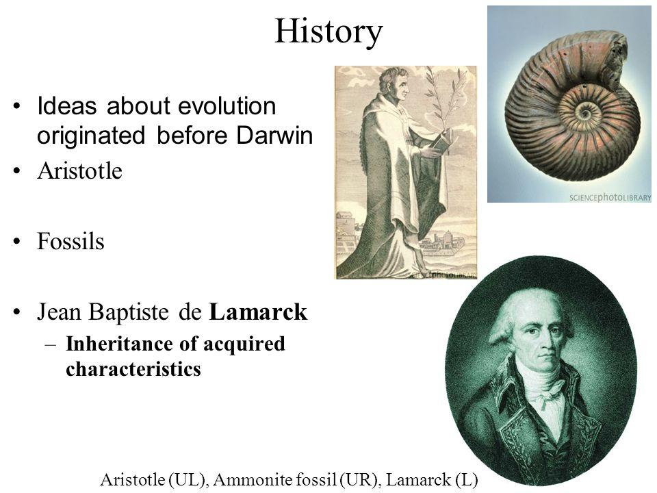 History Ideas about evolution originated before Darwin Aristotle Fossils Jean Baptiste de Lamarck –Inheritance of acquired characteristics Aristotle (