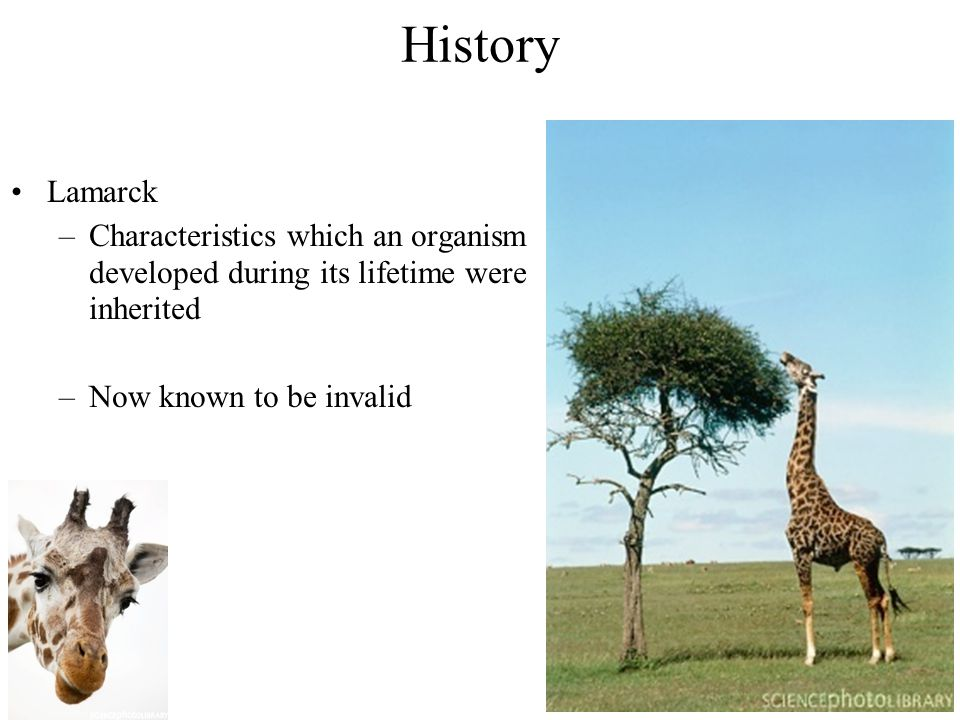History Lamarck –Characteristics which an organism developed during its lifetime were inherited –Now known to be invalid