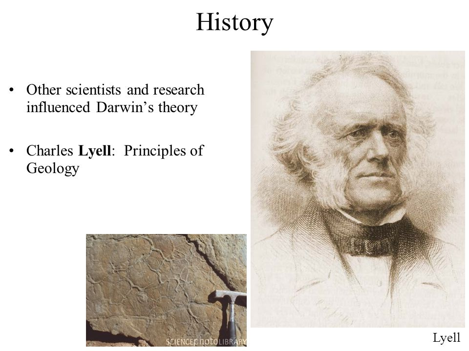Other scientists and research influenced Darwin's theory Charles Lyell: Principles of Geology Lyell