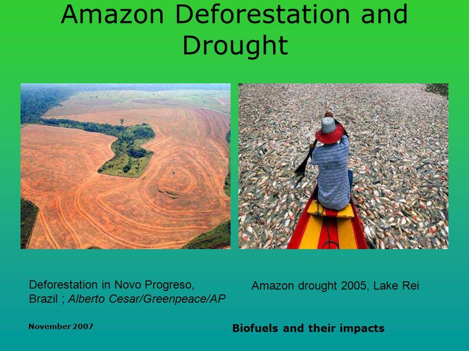 November 2007 Biofuels and their impacts Amazon Deforestation and Drought Deforestation in Novo Progreso, Brazil ; Alberto Cesar/Greenpeace/AP Amazon drought 2005, Lake Rei