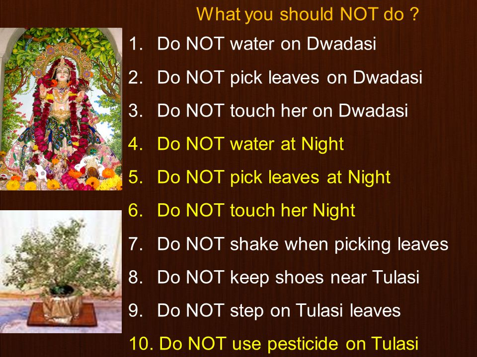 How should we care Tulasi.