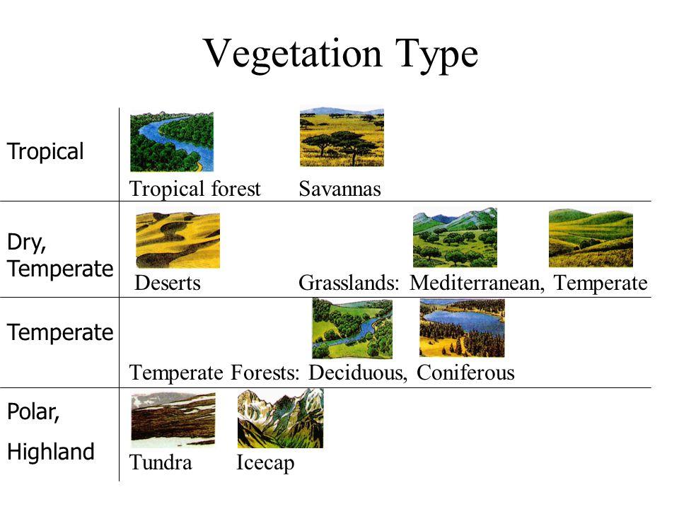 Vegetation Type Tropical forest Savannas DesertsGrasslands: Mediterranean, Temperate Temperate Forests: Deciduous, Coniferous Tundra Icecap Tropical D