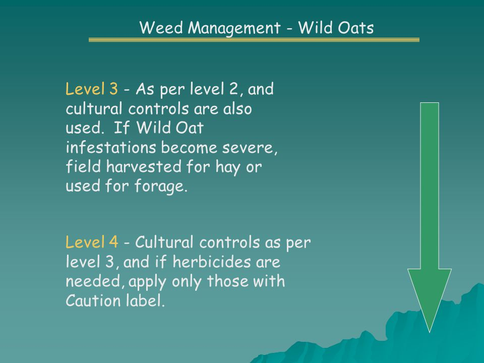 Level 3 - As per level 2, and cultural controls are also used.