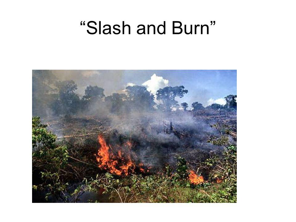 """""""Slash and Burn"""""""