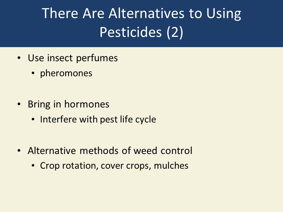 There Are Alternatives to Using Pesticides (2) Use insect perfumes pheromones Bring in hormones Interfere with pest life cycle Alternative methods of
