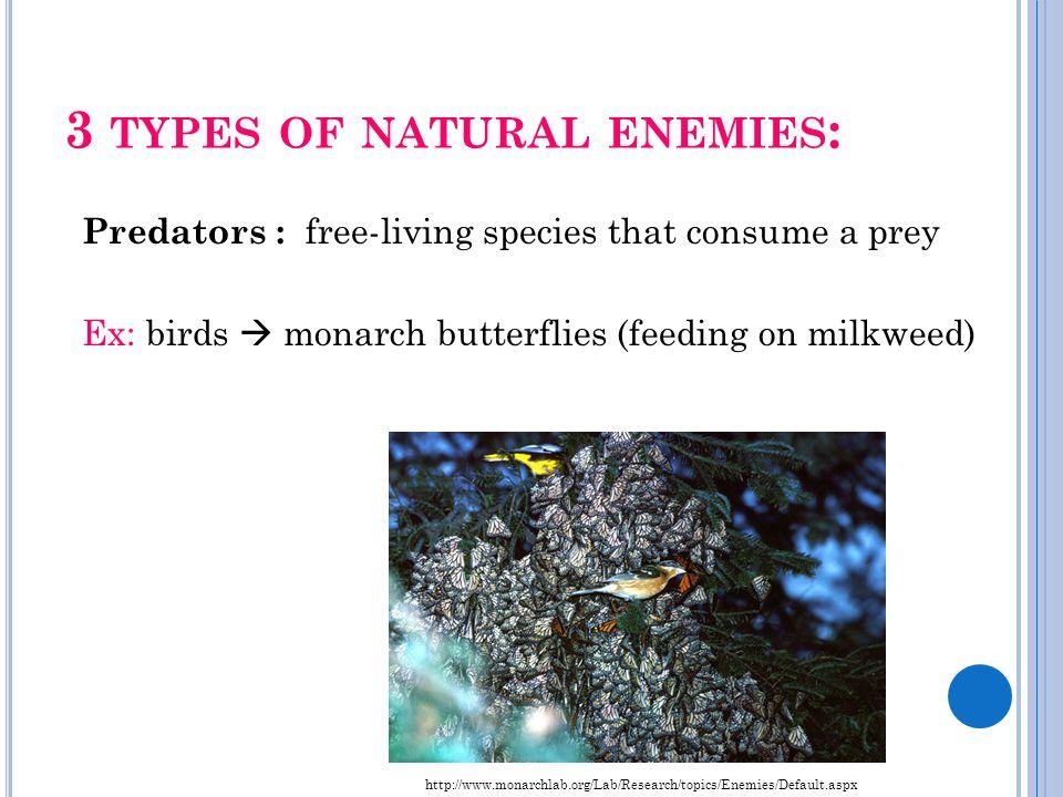 3 TYPES OF NATURAL ENEMIES : Predators : free-living species that consume a prey Ex: birds  monarch butterflies (feeding on milkweed) http://www.mona