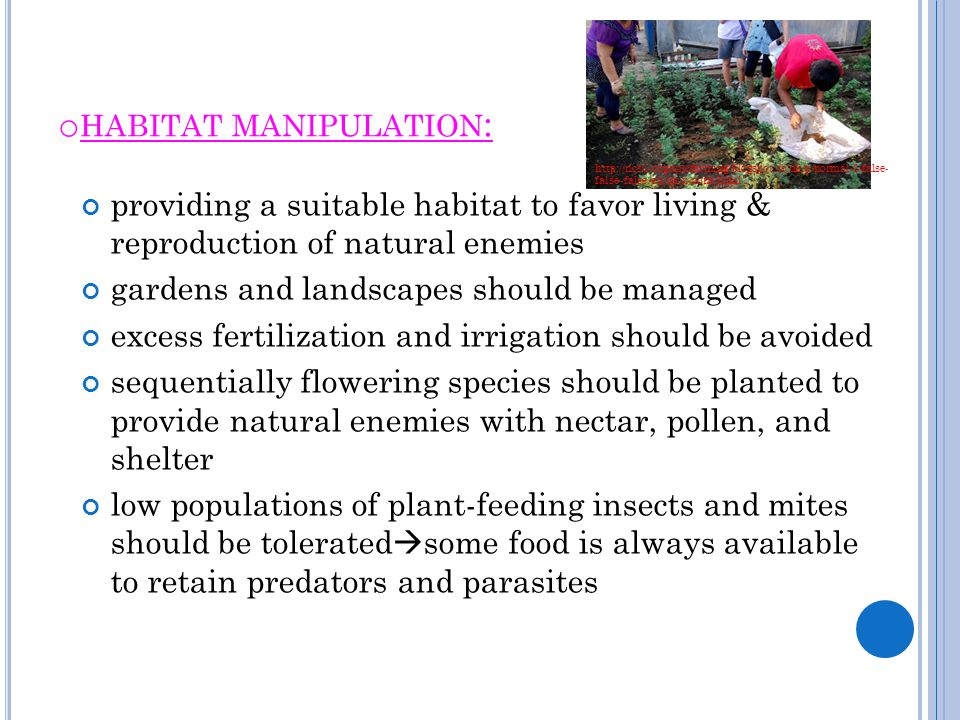 o HABITAT MANIPULATION : providing a suitable habitat to favor living & reproduction of natural enemies gardens and landscapes should be managed exces