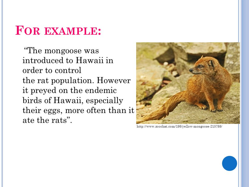 """F OR EXAMPLE : """"The mongoose was introduced to Hawaii in order to control the rat population. However it preyed on the endemic birds of Hawaii, especi"""