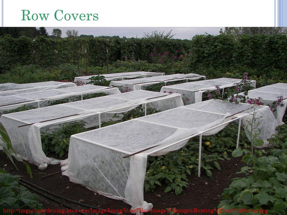 http://imgsrv.gardening.ktsa.com/image/ktsag/UserFiles/Image/F-Images/floating%20row%20cover.jpg Row Covers