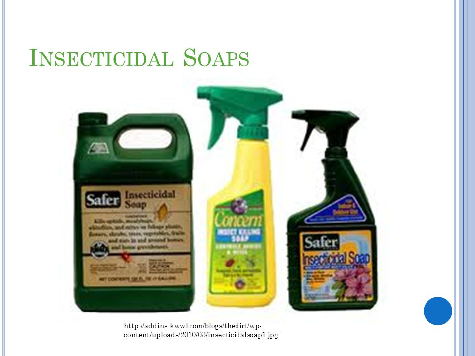 I NSECTICIDAL S OAPS http://addins.kwwl.com/blogs/thedirt/wp- content/uploads/2010/03/insecticidalsoap1.jpg
