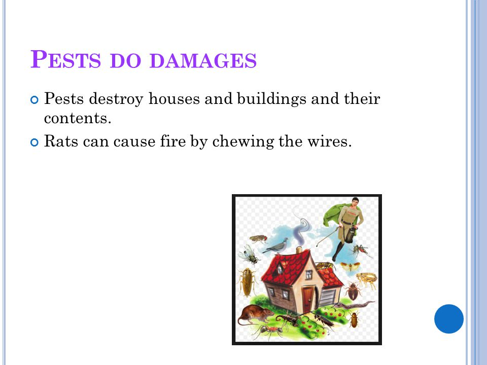 P ESTS DO DAMAGES Pests destroy houses and buildings and their contents. Rats can cause fire by chewing the wires.