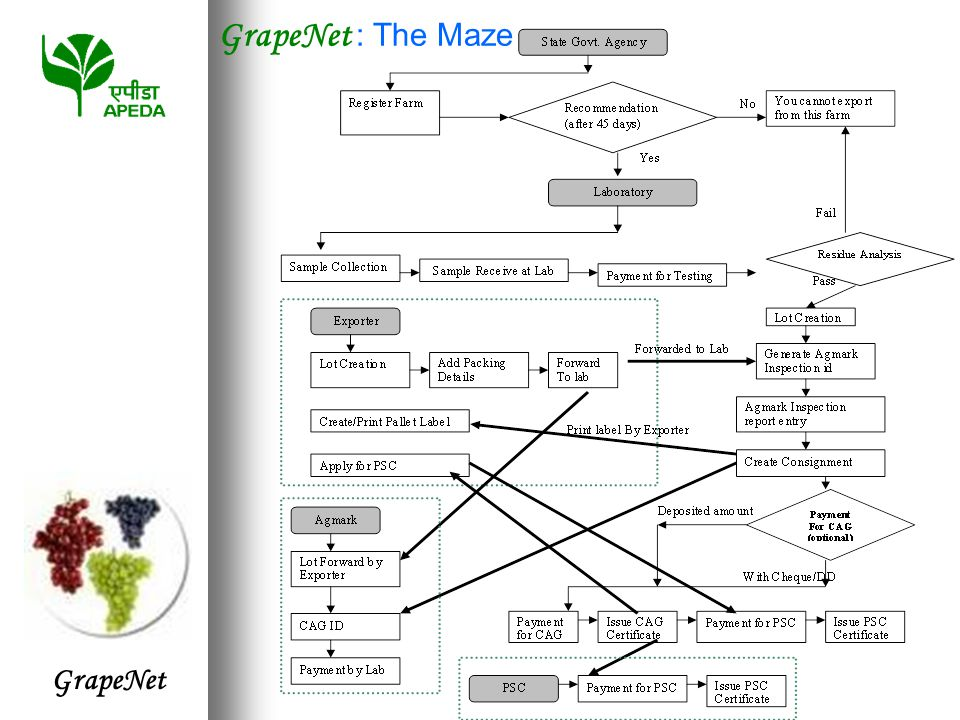 GrapeNet GrapeNet : The Maze