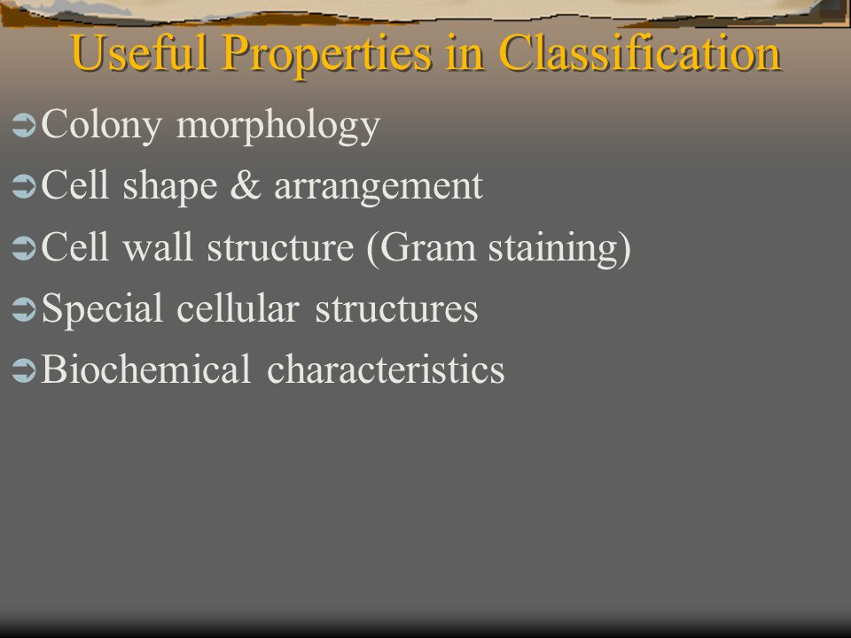 Microbial Phylogeny  Phylogeny of domain Bacteria The 2nd edition of Bergey's Manual of Systematic Bacteriology divides domain Bacteria into 23 phyla.