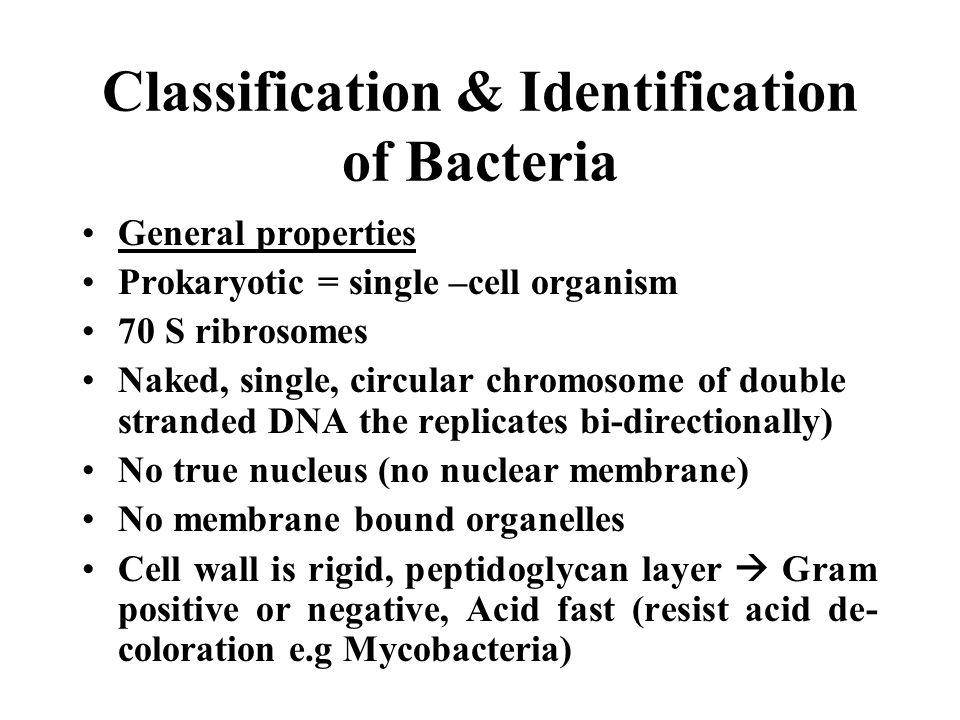 Classification & Identification of Bacteria General properties Prokaryotic = single –cell organism 70 S ribrosomes Naked, single, circular chromosome