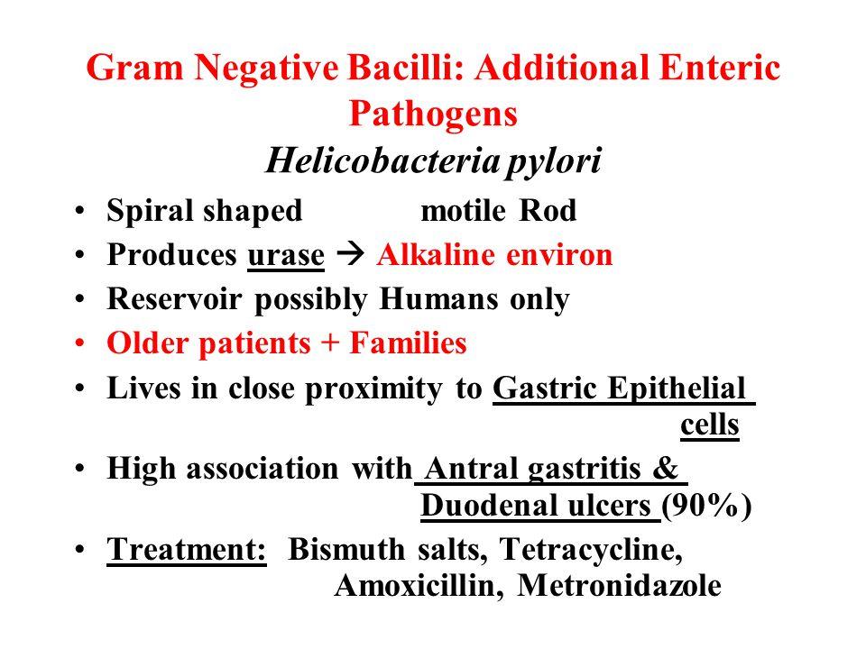 Gram Negative Bacilli: Additional Enteric Pathogens Helicobacteria pylori Spiral shapedmotile Rod Produces urase  Alkaline environ Reservoir possibly