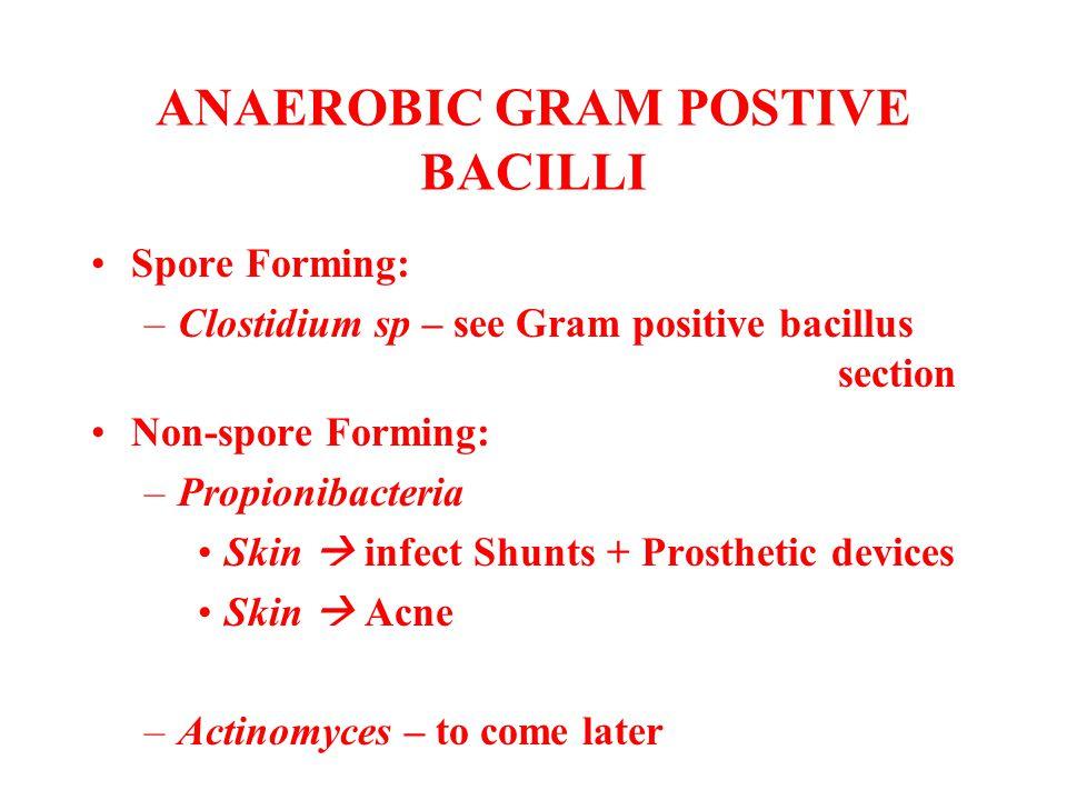 ANAEROBIC GRAM POSTIVE BACILLI Spore Forming: –Clostidium sp – see Gram positive bacillus section Non-spore Forming: –Propionibacteria Skin  infect S