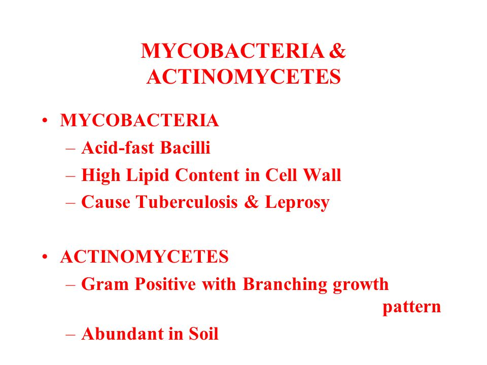 MYCOBACTERIA & ACTINOMYCETES MYCOBACTERIA –Acid-fast Bacilli –High Lipid Content in Cell Wall –Cause Tuberculosis & Leprosy ACTINOMYCETES –Gram Positi