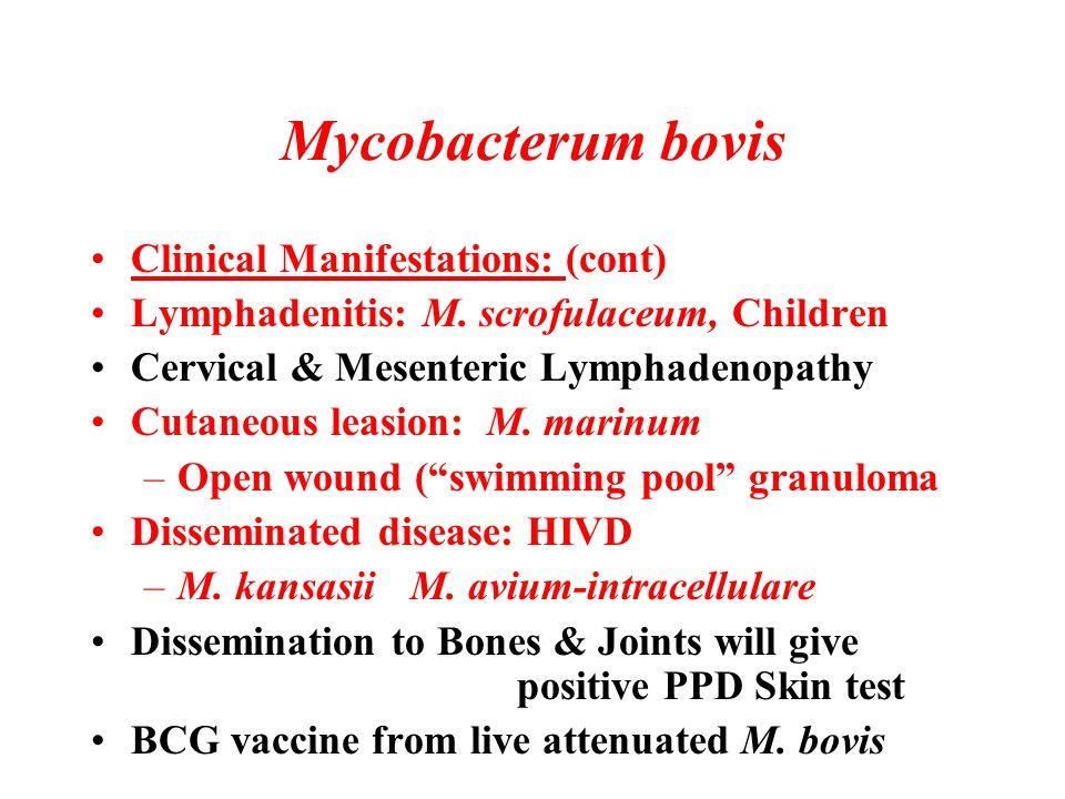 Mycobacterum bovis Clinical Manifestations: (cont) Lymphadenitis: M. scrofulaceum, Children Cervical & Mesenteric Lymphadenopathy Cutaneous leasion: M