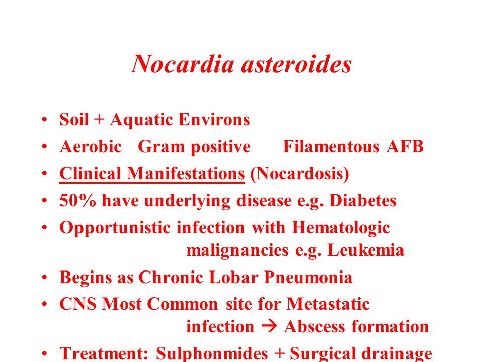 Nocardia asteroides Soil + Aquatic Environs AerobicGram positiveFilamentous AFB Clinical Manifestations (Nocardosis) 50% have underlying disease e.g.