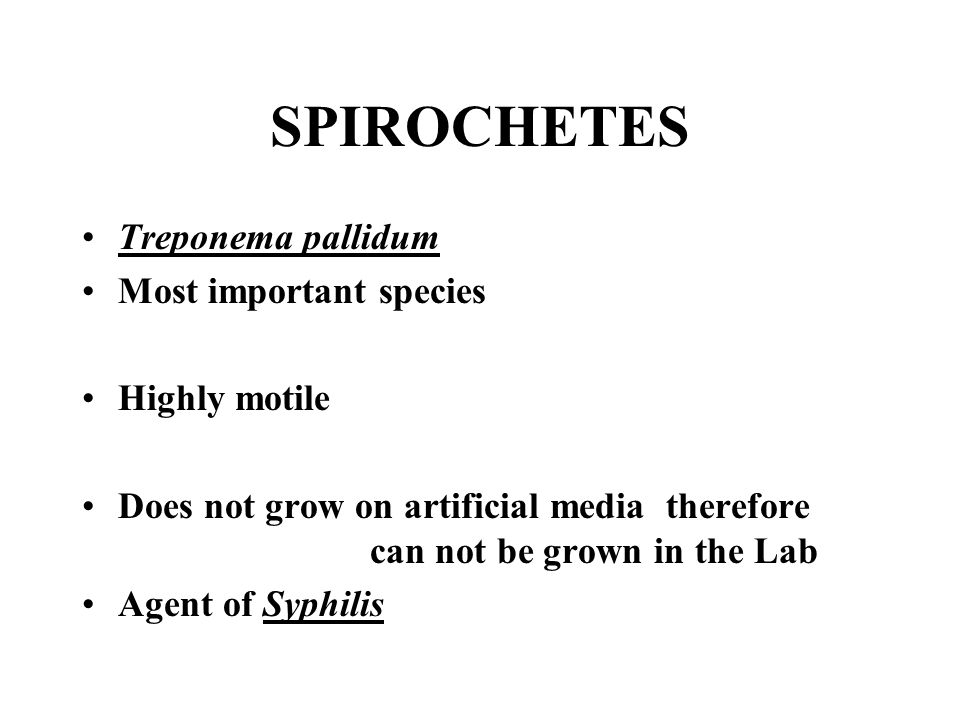 SPIROCHETES Treponema pallidum Most important species Highly motile Does not grow on artificial media therefore can not be grown in the Lab Agent of S