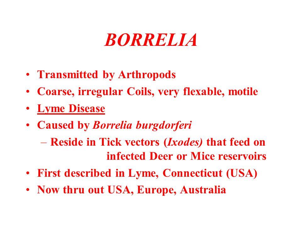 BORRELIA Transmitted by Arthropods Coarse, irregular Coils, very flexable, motile Lyme Disease Caused by Borrelia burgdorferi –Reside in Tick vectors