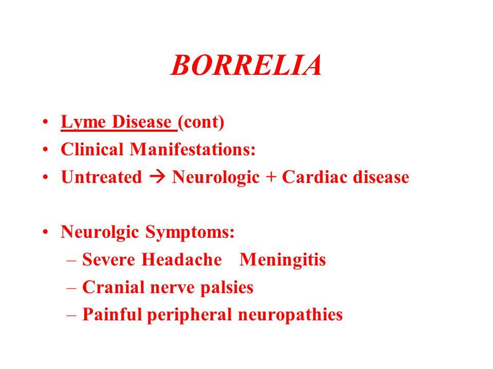 BORRELIA Lyme Disease (cont) Clinical Manifestations: Untreated  Neurologic + Cardiac disease Neurolgic Symptoms: –Severe HeadacheMeningitis –Cranial
