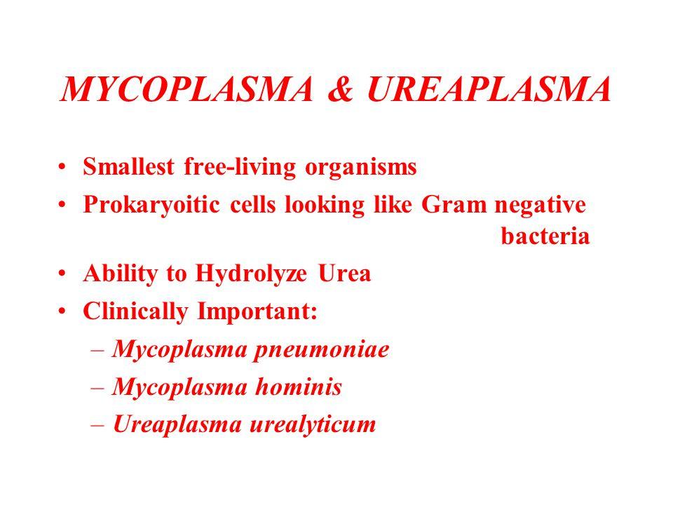 MYCOPLASMA & UREAPLASMA Smallest free-living organisms Prokaryoitic cells looking like Gram negative bacteria Ability to Hydrolyze Urea Clinically Imp