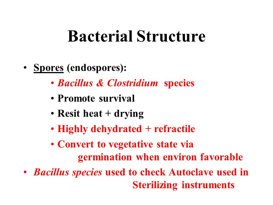 Bacterial Structure Spores (endospores): Bacillus & Clostridium species Promote survival Resit heat + drying Highly dehydrated + refractile Convert to