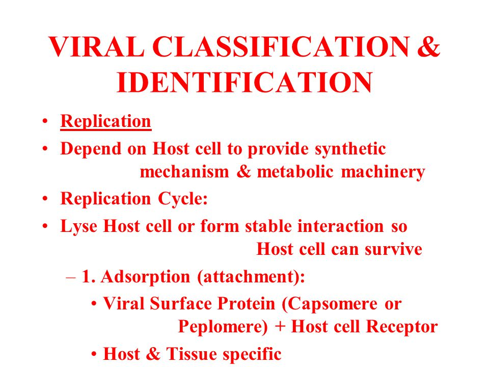 VIRAL CLASSIFICATION & IDENTIFICATION Replication Depend on Host cell to provide synthetic mechanism & metabolic machinery Replication Cycle: Lyse Hos
