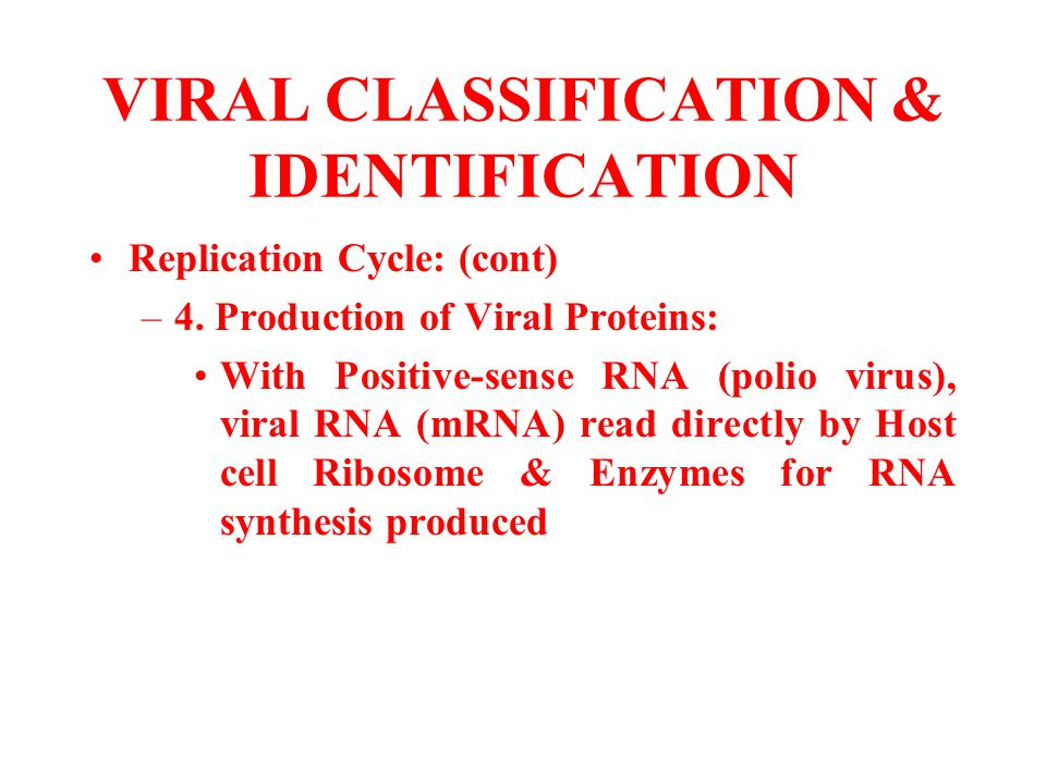 VIRAL CLASSIFICATION & IDENTIFICATION Replication Cycle: (cont) –4. Production of Viral Proteins: With Positive-sense RNA (polio virus), viral RNA (mR
