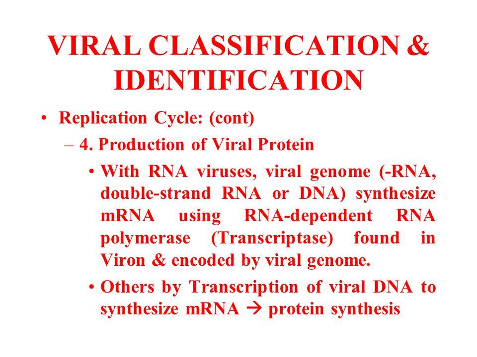 VIRAL CLASSIFICATION & IDENTIFICATION Replication Cycle: (cont) –4. Production of Viral Protein With RNA viruses, viral genome (-RNA, double-strand RN