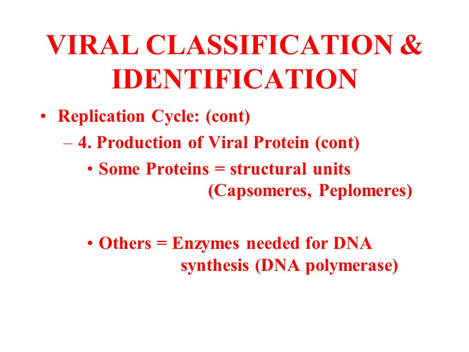 VIRAL CLASSIFICATION & IDENTIFICATION Replication Cycle: (cont) –4. Production of Viral Protein (cont) Some Proteins = structural units (Capsomeres, P