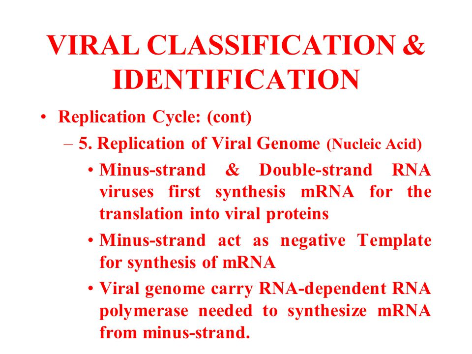 VIRAL CLASSIFICATION & IDENTIFICATION Replication Cycle: (cont) –5. Replication of Viral Genome (Nucleic Acid) Minus-strand & Double-strand RNA viruse