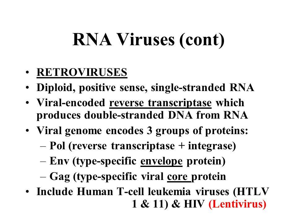 RNA Viruses (cont) RETROVIRUSES Diploid, positive sense, single-stranded RNA Viral-encoded reverse transcriptase which produces double-stranded DNA fr