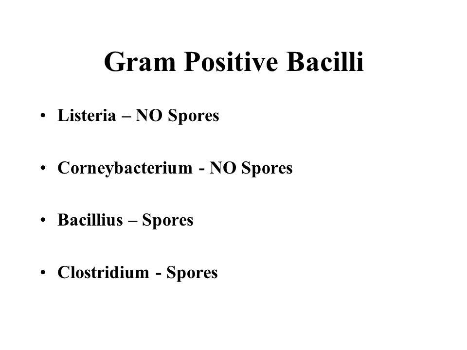 Gram Positive Bacilli Listeria – NO Spores Corneybacterium - NO Spores Bacillius – Spores Clostridium - Spores