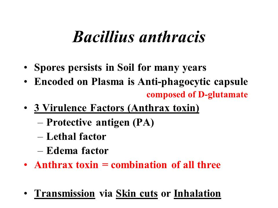 Bacillius anthracis Spores persists in Soil for many years Encoded on Plasma is Anti-phagocytic capsule composed of D-glutamate 3 Virulence Factors (A