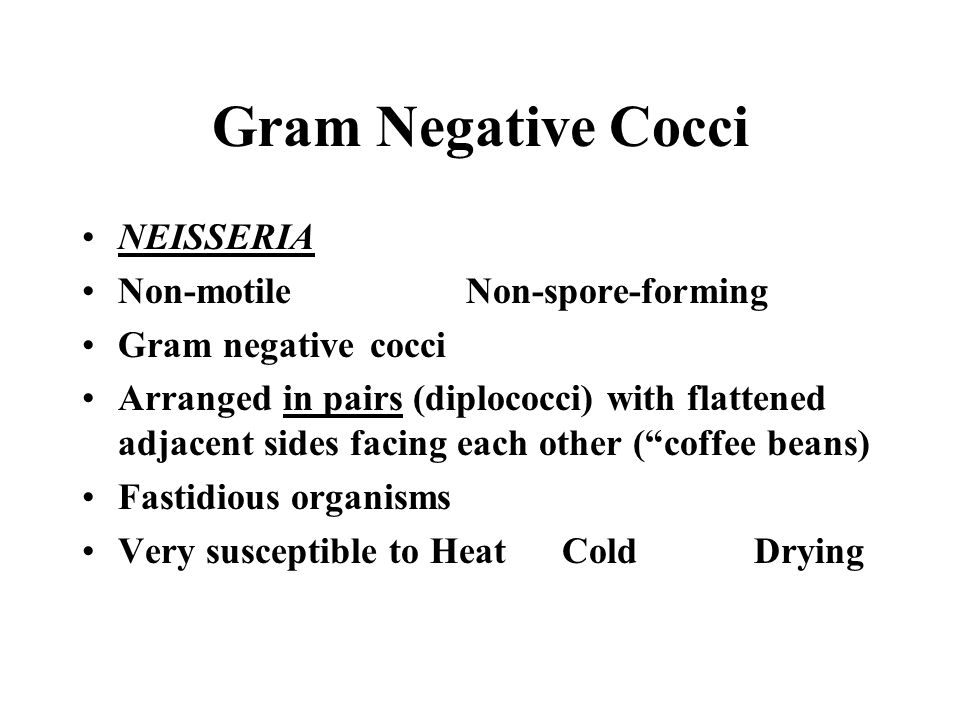 Gram Negative Cocci NEISSERIA Non-motileNon-spore-forming Gram negativecocci Arranged in pairs (diplococci) with flattened adjacent sides facing each