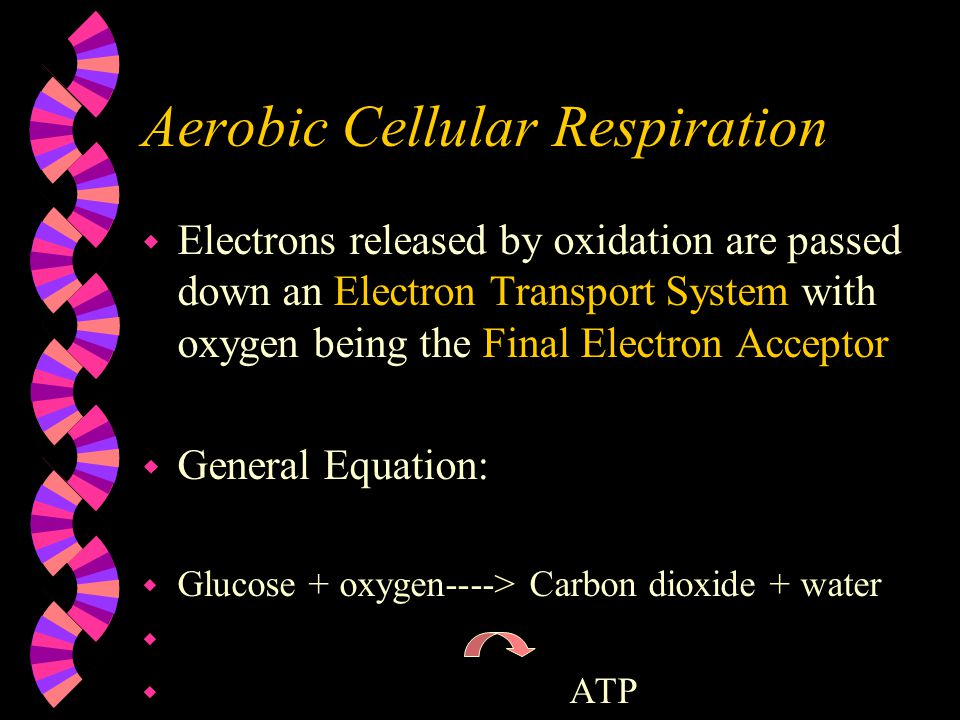 Aerobic Cellular Respiration w Electrons released by oxidation are passed down an Electron Transport System with oxygen being the Final Electron Acceptor w General Equation: w Glucose + oxygen----> Carbon dioxide + water w w ATP