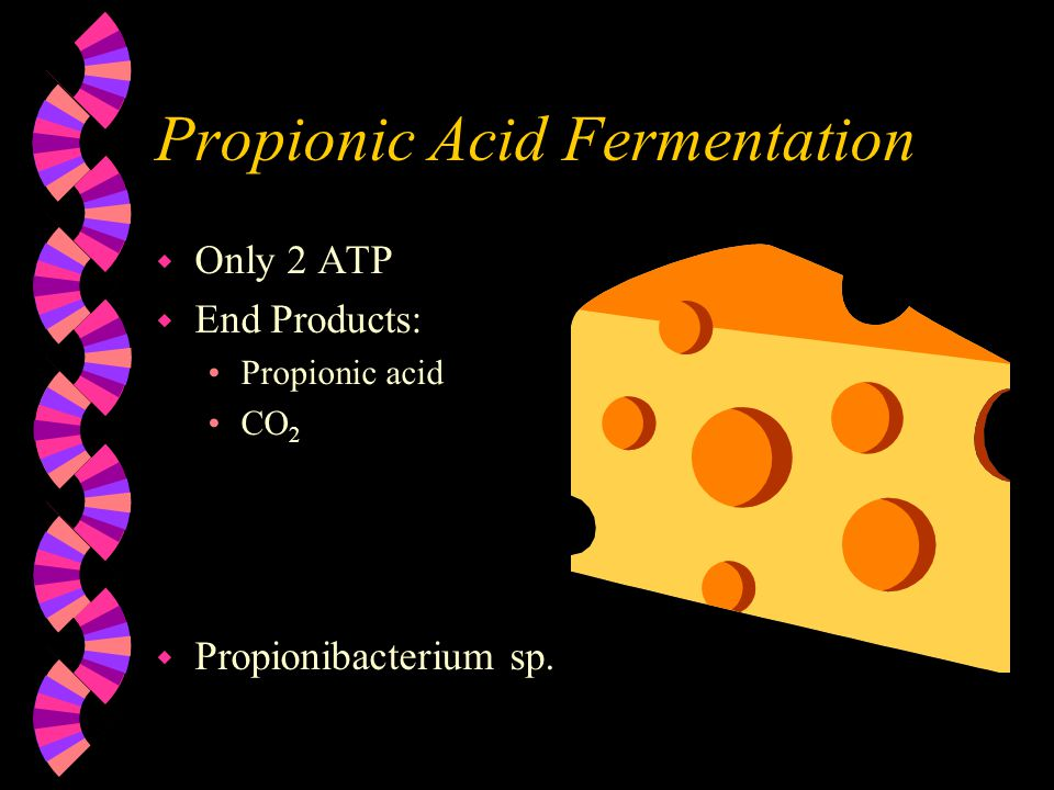Propionic Acid Fermentation w Only 2 ATP w End Products: Propionic acid CO 2 w Propionibacterium sp.
