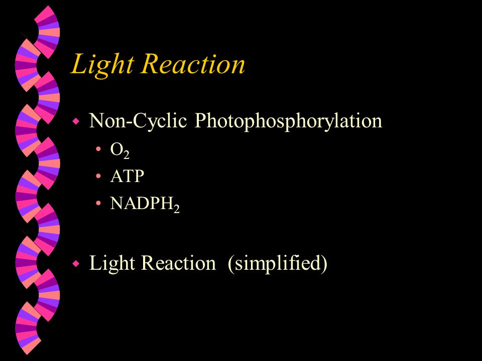 Light Reaction w Non-Cyclic Photophosphorylation O 2 ATP NADPH 2 w Light Reaction (simplified)