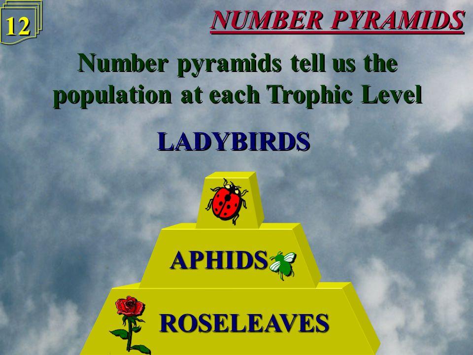NUMBER PYRAMIDS 11