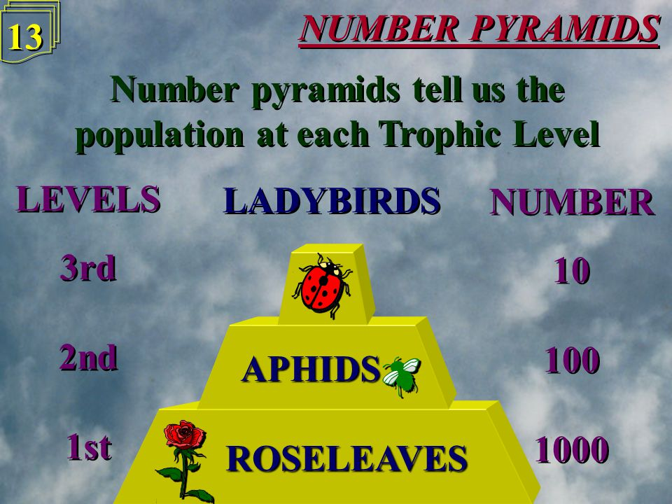 NUMBER PYRAMIDS 12 LADYBIRDS ROSELEAVES Number pyramids tell us the population at each Trophic Level Number pyramids tell us the population at each Trophic Level APHIDS