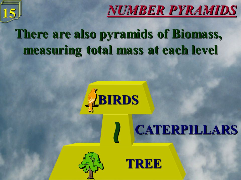 NUMBER PYRAMIDS 14 Number pyramids may not always be pyramid shaped Number pyramids may not always be pyramid shaped TREE CATERPILLARS BIRDS