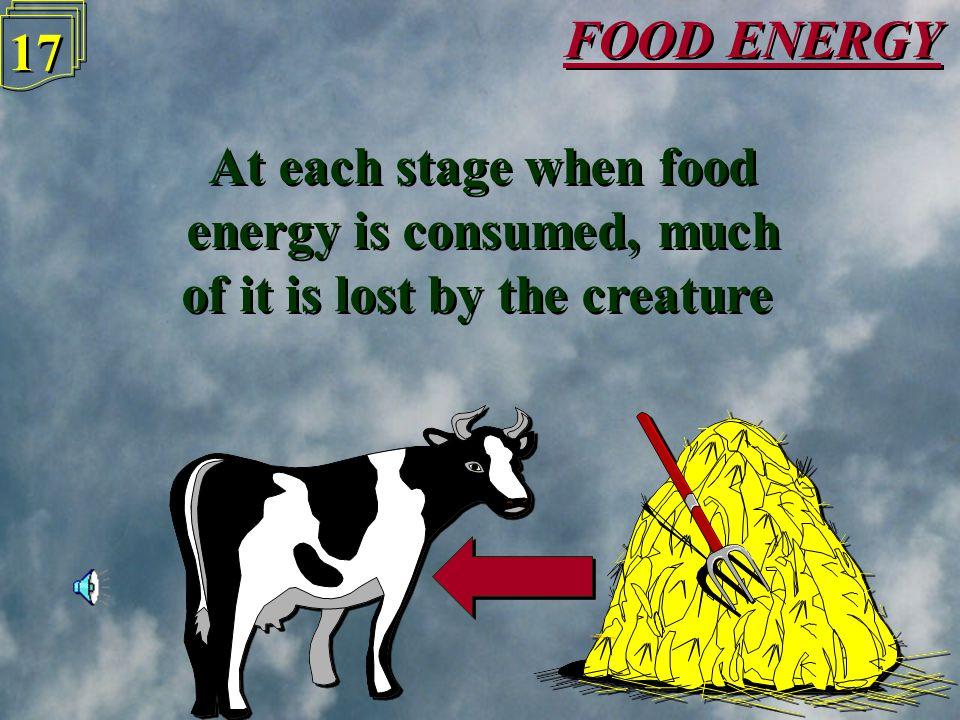 FOOD ENERGY 16