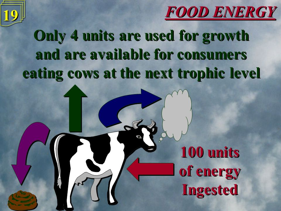 FOOD ENERGY 18 100 units of energy Ingested 100 units of energy Ingested 63 units are lost in urine & faeces 63 units are lost in urine & faeces 33 units used up by breathing & heat loss 33 units used up by breathing & heat loss