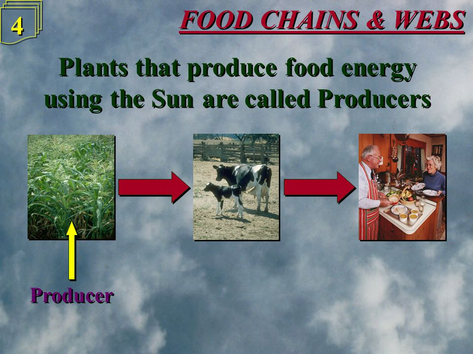 FOOD CHAINS & WEBS 4 4 Plants that produce food energy using the Sun are called Producers Plants that produce food energy using the Sun are called Producers Producer